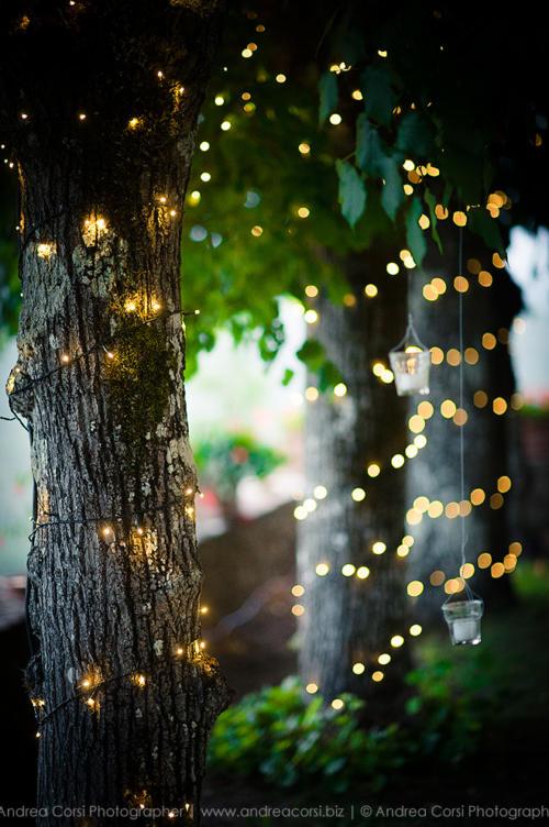 Little Fairy Lights On Trees
